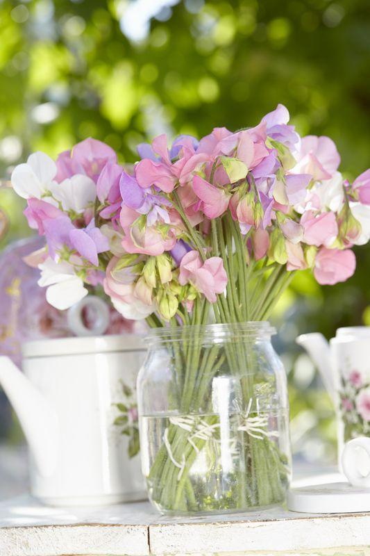 """<p>Sweet Peas are climbing plants, which can get up to 2m high. Originally not very impressive and in the eye of the spectator, cultivator Henry Eckford made the sweet pea to what it is today. Sweetly scented and famous for its loving looks.</p><p><a class=""""link rapid-noclick-resp"""" href=""""https://go.redirectingat.com?id=127X1599956&url=https%3A%2F%2Fwww.flowerbx.com%2Fballerina-sweetpea&sref=https%3A%2F%2Fwww.housebeautiful.com%2Fuk%2Fgarden%2Fplants%2Fg22113752%2Fjuly-flowers-seasonal-bloom%2F"""" rel=""""nofollow noopener"""" target=""""_blank"""" data-ylk=""""slk:BUY NOW"""">BUY NOW</a></p>"""