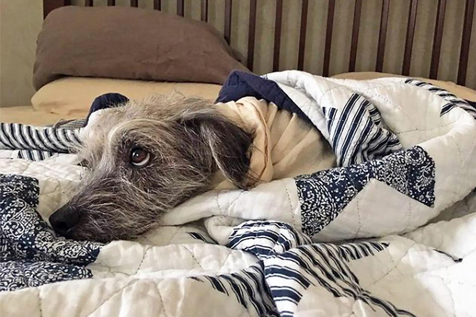 dog wrapped in cozy blanket