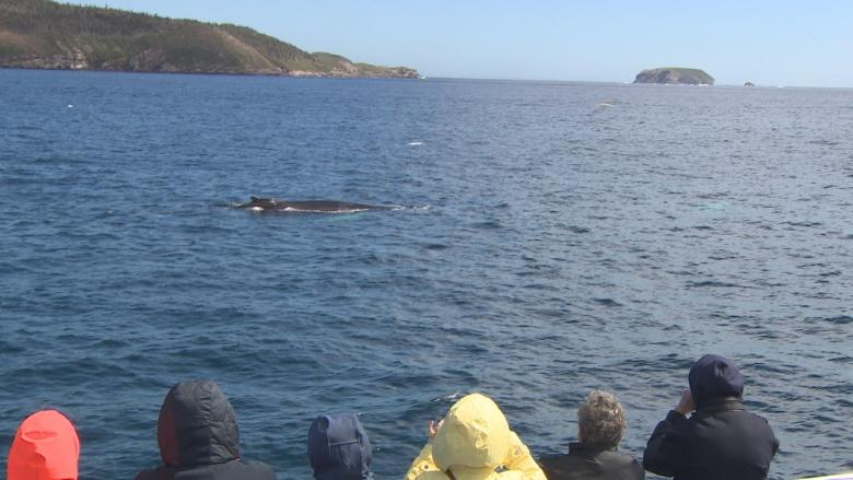 'It couldn't be a better day': Whales, icebergs delight tourists who brave the N.L. cold