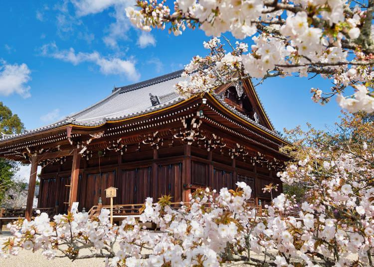 A place of worship famous for Kyoto's last-blooming cherry blossoms