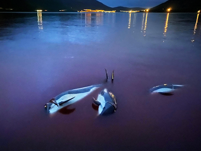 The slaughter of Atlantic white-sided dolphins sparked outrage  (Sea Shepherd/SWNS)