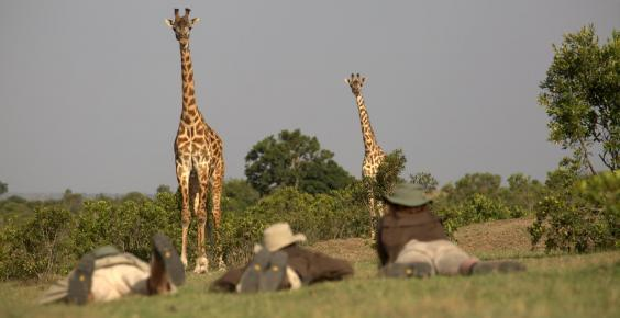 On two feet, find giraffes... (Asilia)