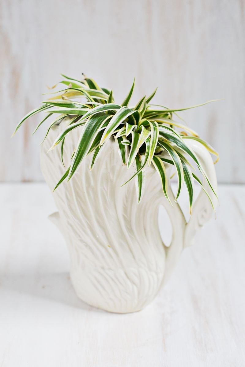 <p>Great at purifying the air and easy to grow, it's hard to go wrong with a spider plant.</p>