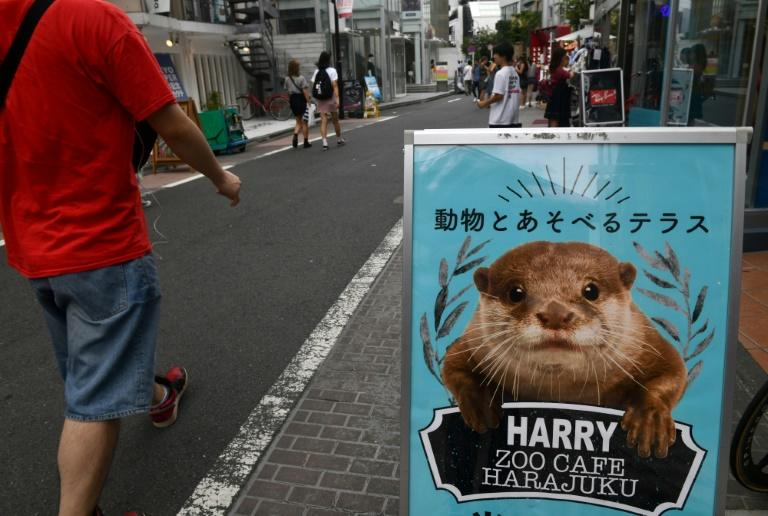 "A billboard for an ""otter cafe"" in Tokyo's Harajuku district (AFP Photo/Toshifumi KITAMURA)"