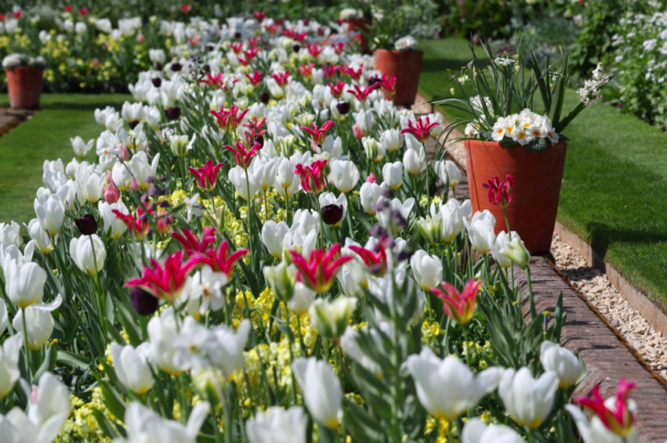 The flowers have bloomed because of an unseasonably warm spring (PA)