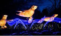 "<p>For an fun holiday experience for the whole family, head up to the Bronx Zoo, where you can attend the ultra-festive <a href=""https://bronxzoo.com/holiday-lights"" rel=""nofollow noopener"" target=""_blank"" data-ylk=""slk:&quot;Holiday Lights&quot; event"" class=""link rapid-noclick-resp"">""Holiday Lights"" event</a> this year. With social distancing in place for all activities, you can explore five lantern safaris decked out in illuminated animals — all before enjoying ice-carving demonstrations, wildlife theater and more. </p>"
