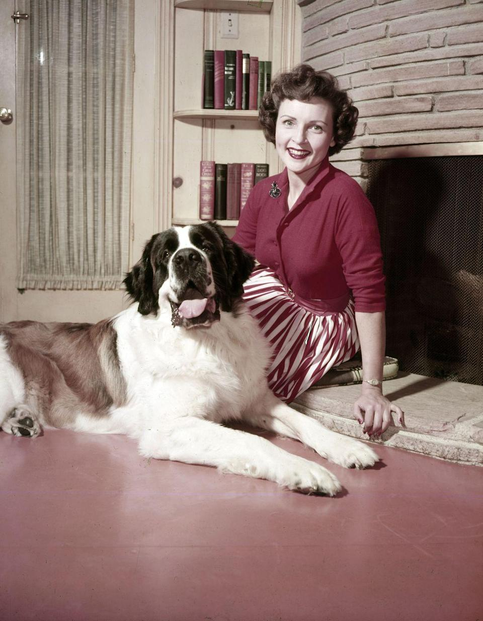 """<p><a href=""""https://www.goodhousekeeping.com/life/entertainment/g30480315/betty-white-photos/"""" rel=""""nofollow noopener"""" target=""""_blank"""" data-ylk=""""slk:Actress Betty White"""" class=""""link rapid-noclick-resp"""">Actress Betty White</a> gives fans a glimpse at her life at home with her St. Bernard, Stormy. The notorious animal lover also had a Pekinese and a Poodle at the time. """"Anything with a leg on each corner is my favorite. I find them all fascinating. Though if they have more than four legs, I'm not as quite as enthusiastic,"""" Betty told <a href=""""https://www.mnn.com/lifestyle/arts-culture/stories/betty-whites-life-at-the-zoo"""" rel=""""nofollow noopener"""" target=""""_blank"""" data-ylk=""""slk:MNN"""" class=""""link rapid-noclick-resp"""">MNN</a>. </p>"""