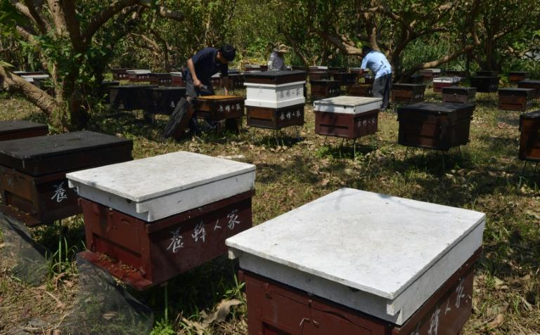 A string of food safety scandals in Taiwan has driven demand for clean, traceable produce, with pure honey seen as particularly beneficial