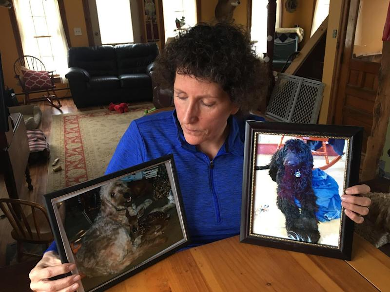 "In this Wednesday, Feb. 8, 2017 photo, Denise Krohn sits at her kitchen table with photos of her goldendoodle dogs Quigley, left, and Kirby, right, in Florida, N.Y. The dogs were shot dead during a burglary a year ago at her home in rural upstate New York. Krohn is pushing for ""Kirby and Quigley's Law,"" legislation named after her slain pets that would make it a felony punishable by two years in prison and a $5,000 fine to kill a dog or cat while committing another serious crime. (AP Photo/Mary Esch)"