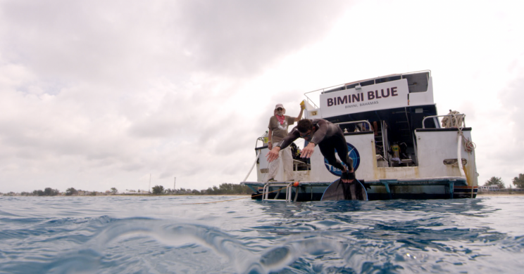 Michael Phelps dives into the water in the Bahamas. (Photo: Discovery)