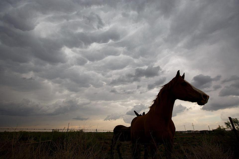 <p>Mammatus clouds herald severe storms over Clovis, New Mexico // May 9, 2017</p>