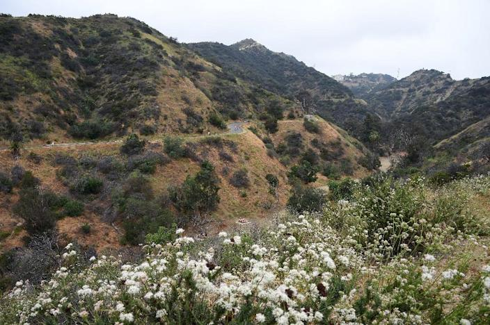 Runyon Canyon Park, a popular walking and hiking destination in the Hollywood Hills (AFP Photo/Robyn Beck)