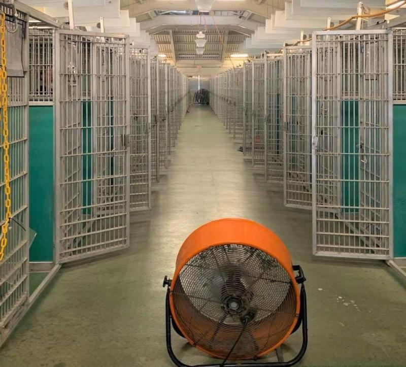The Friends of West Palm Beach County Animal Care and Control is celebrating the fact that its kennel is empty for the first time ever. (Photo: Friends of West Palm Beach County Animal Care and Control)