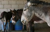 There are plans to replace some of the traditional donkeys with a new system of 20 electric cars at Petra