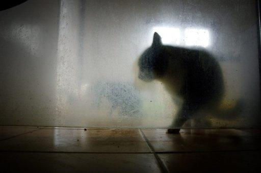 As more victims of London's serial cat killer are found, one question becomes more pressing: could humans be next?