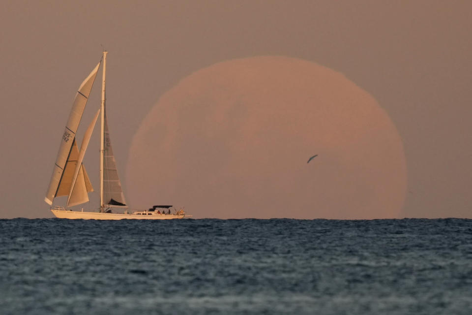 """A yacht sails past as the moon rises in Sydney Wednesday, May 26, 2021. A total lunar eclipse, also known as a super """"blood"""" moon will take place later as the moon appears slightly reddish-orange in color. (AP Photo/Mark Baker)"""