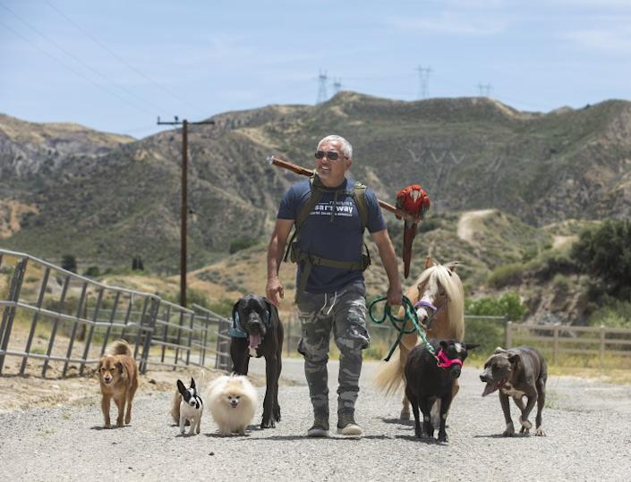 SANTA CLARITA, CA-JUNE 8, 2020: Dog trainer Cesar Millan goes for a walk on his ranch in Santa Clarita with a variety of dogs, a miniature horse, a goat and a macaw. All the animals and bird belong to Milan except for the great dane, that was visiting. (Mel Melcon/Los Angeles Times)