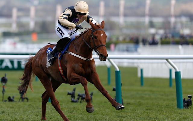 <span>Yorkhill in action at last year's Cheltenham</span> <span>Credit: Getty Images </span>
