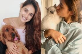 Disha Patani says 'best therapy has fur and four legs', urges fans to voice against animal cruelty