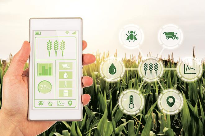 The agritech sector is growing at the rate of 25% year on year, the report says.