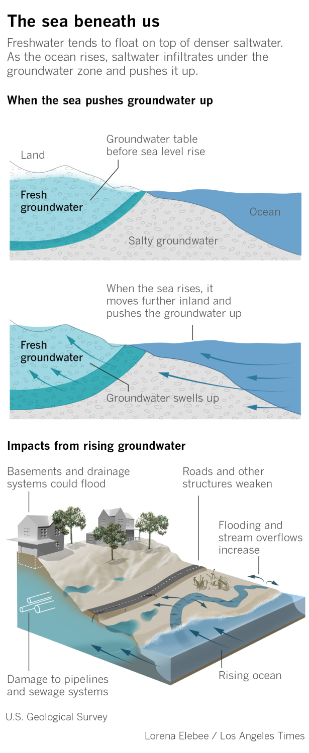 How sea-level rise pushes groundwater up to the surface and impacts drainage, basements, roads and streams.