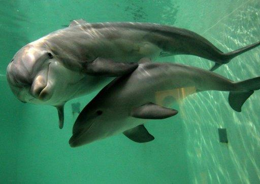 The other 24 bottlenose dolphins had arrived and were acclimatising