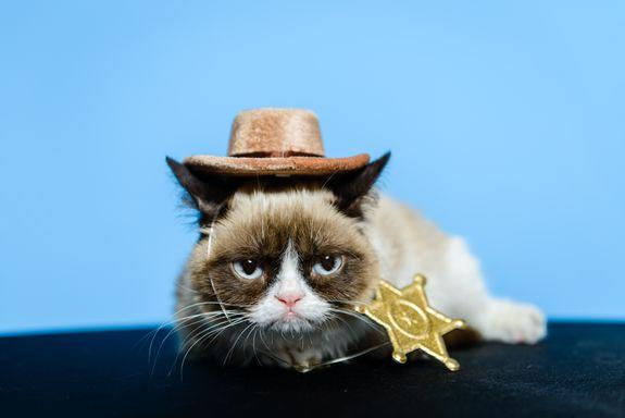 The internet's only big enough for one grumpy cat.