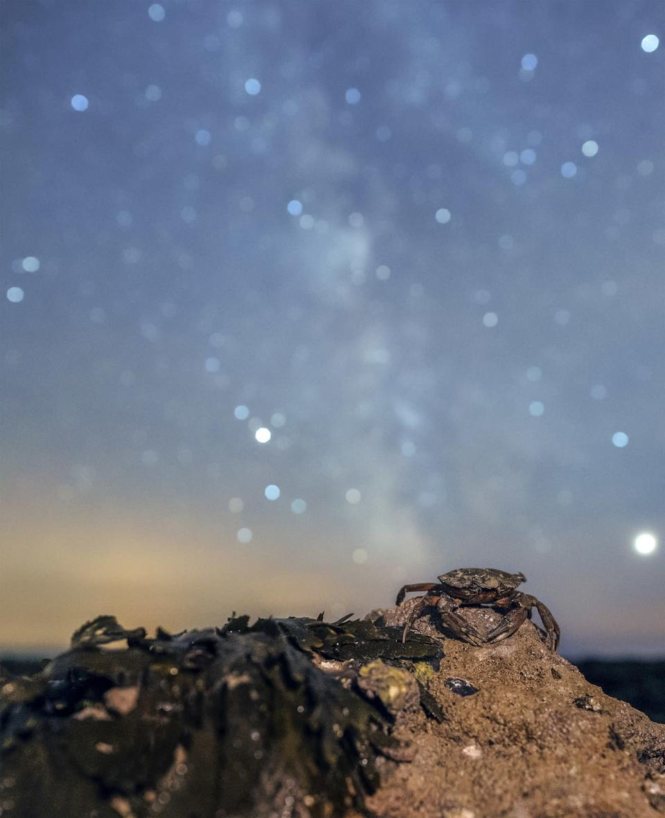 Starry Crab by Anthony Whitbourn won the Living Dark Skies category (Anthony Whitbourn/PA)