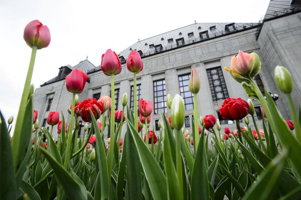 """<span class=""""caption"""">Tulips bloom outside the Supreme Court of Canada in Ottawa.</span> <span class=""""attribution""""><span class=""""source"""">THE CANADIAN PRESS/Sean Kilpatrick </span></span>"""
