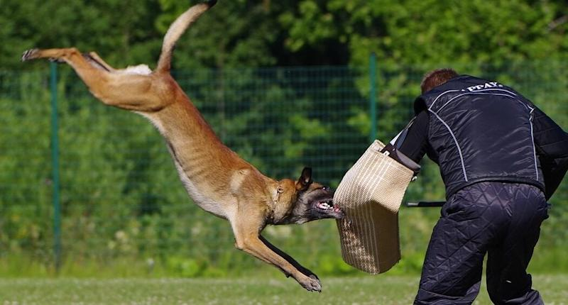 Delhi Metro Security to Get Belgian Malinois Guard Dog, the Canine Breed That was Reportedly Part of Osama Bin Laden Raid