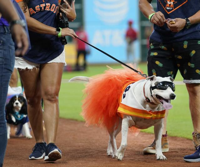 Check out the pups at MMP for Astros' Dog Day