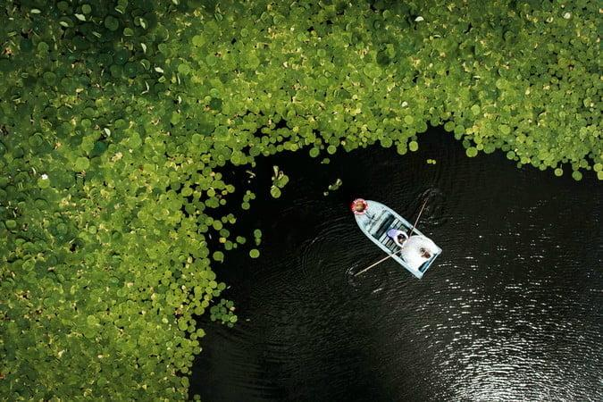 best drone photos lily pads