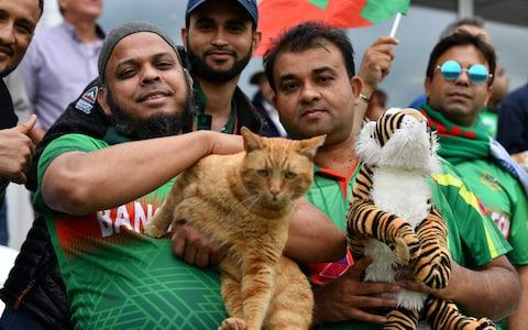 A Bangladesh fan in the crowd is seen with a cat during the 2019 Cricket World Cup group stage match between West Indies and Bangladesh at The County Ground in Taunton - Credit: SAEED KHAN/AFP/Getty Images