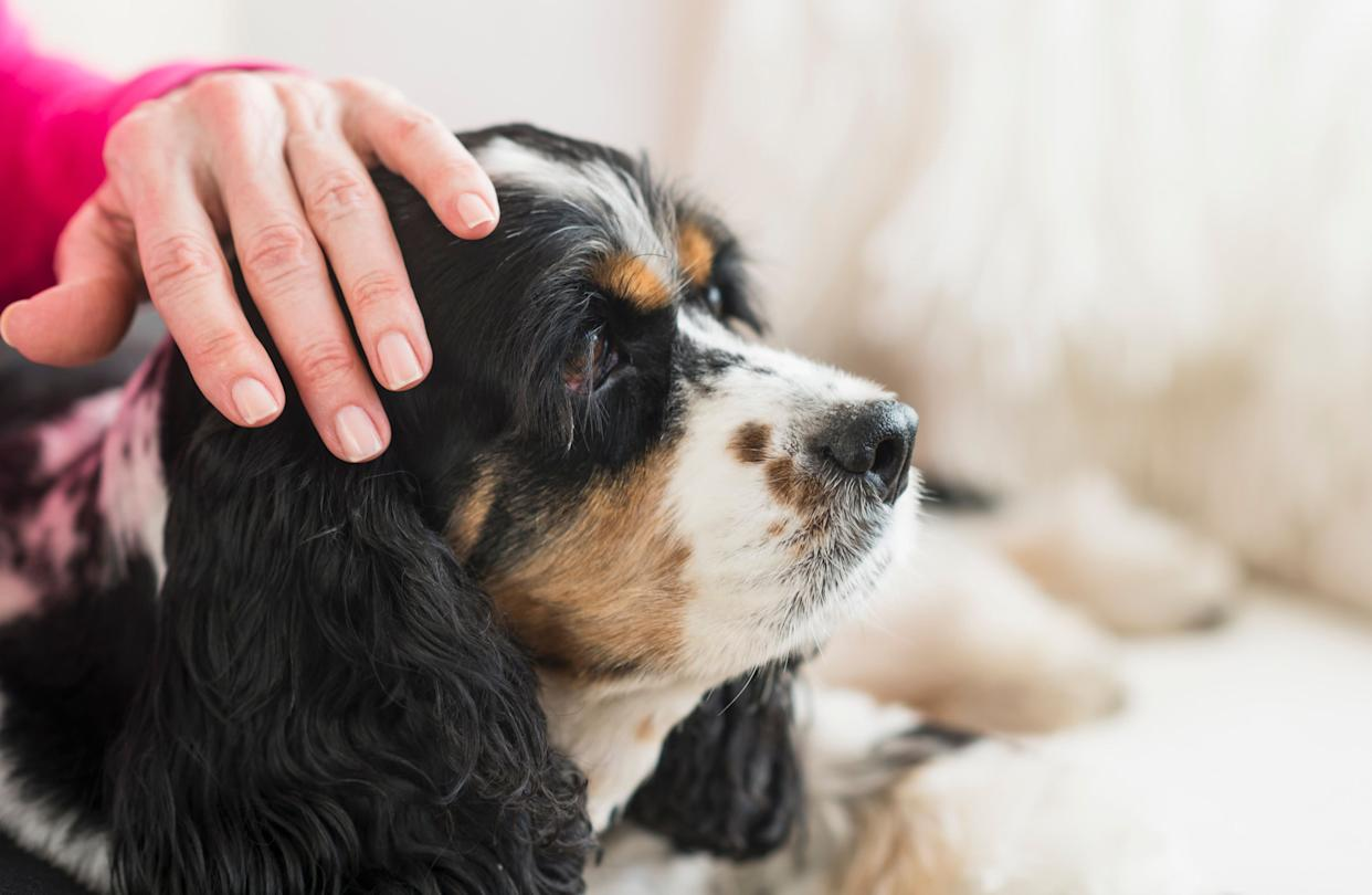 A woman pets her dog