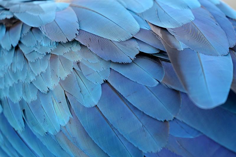The feathers of a macaw are seen as it stands on a rooftop of a building in Caracas, Venezuela, June 6, 2019. (Photo: Manaure Quintero/Reuters)