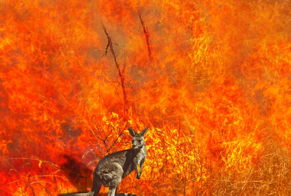 Bushfires will get worse as global temperature averages rise, scientists warn. Source: Getty