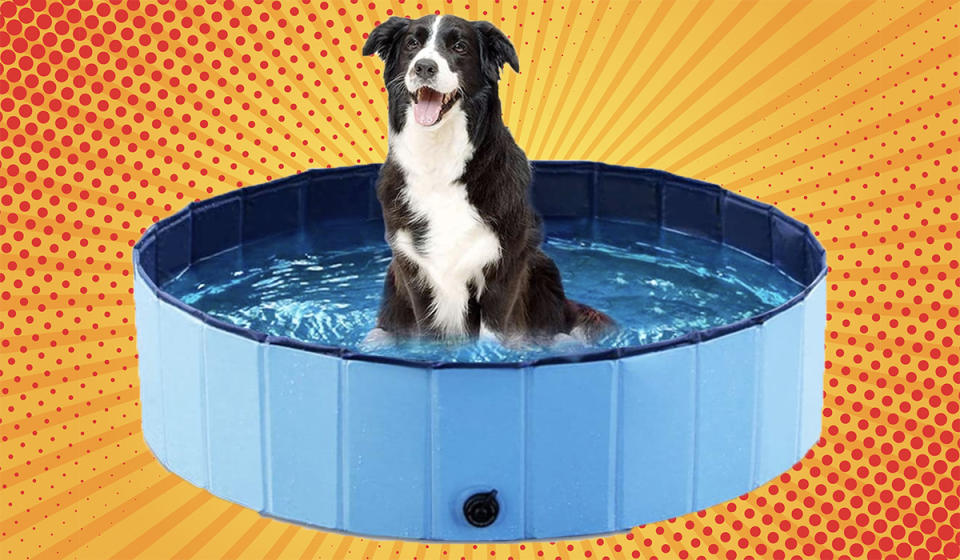 Your pup is going to have a blast. (Photo: Amazon)