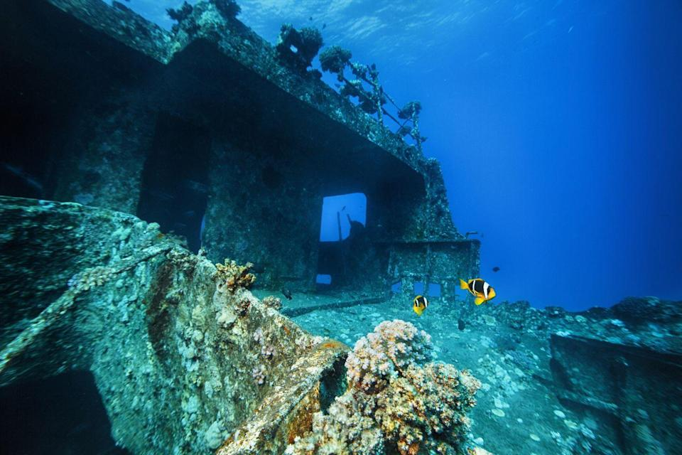 <p>What was probably once a bustling ship deck is now mostly inhabited by clownfish, crustaceans, and corrosion. </p>