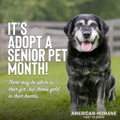 NO AGE LIMIT ON LOVE: American Humane encourages you to consider bringing an older pet into your family