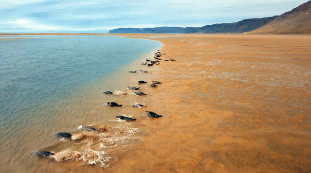 <p>Rauðisandur Beach was the software company manager's favorite location due to its remote location and golden-pink sand. (Photo: Ran Rosenzweig/Caters News) </p>