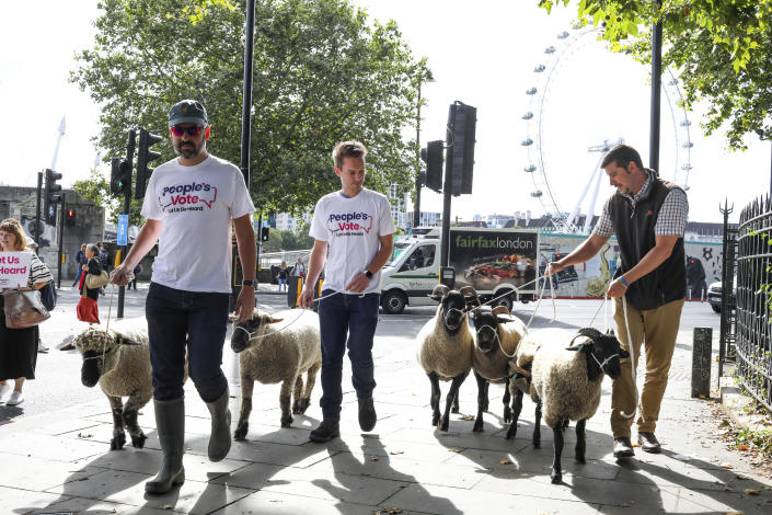 Demonstrators walk a flock of sheep through the streets as part of a protest against Brexit, in central London, Thursday, Aug. 15, 2019. Protestors are walking sheep past government buildings as part of 'Farmers for a People's Vote' to highlight the risk Brexit presents to livestock. (AP Photo/Vudi Xhymshiti)