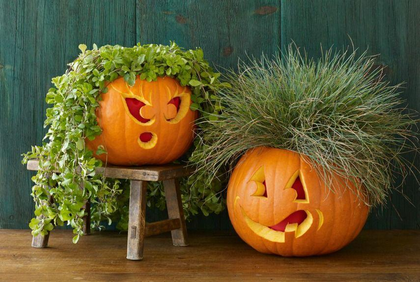 <p>Top your pumpkin with its very own plant toupee. Carve out the top of the gourd and tuck in a pot of grass or ivy for a truly awesome hairdo. </p>