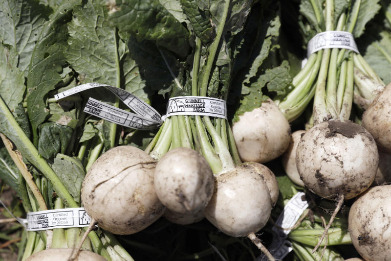 In this Monday, June 10, 2019 photo, Hakurei turnips sit in a field after being harvested on Andrew Dunham's 80-acre organic farm, in Grinnell, Iowa. Like farmers throughout the Midwest, torrential spring rains turned Dunham's land into sticky muck that wouldn't let him plant crops this spring. But unlike other farmers, Dunham won't get a piece of a $16 billion aid package to offset his losses, and he can't fall back on federally subsidized crop insurance because Dunham grows herbs, flowers and dozens of vegetable varieties but not the region's dominant crops of corn and soybeans. (AP Photo/Charlie Neibergall)
