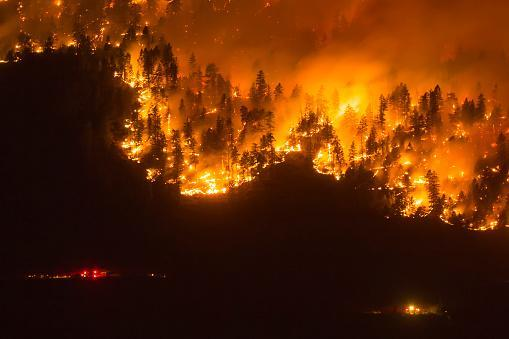Wildfires/Getty Images
