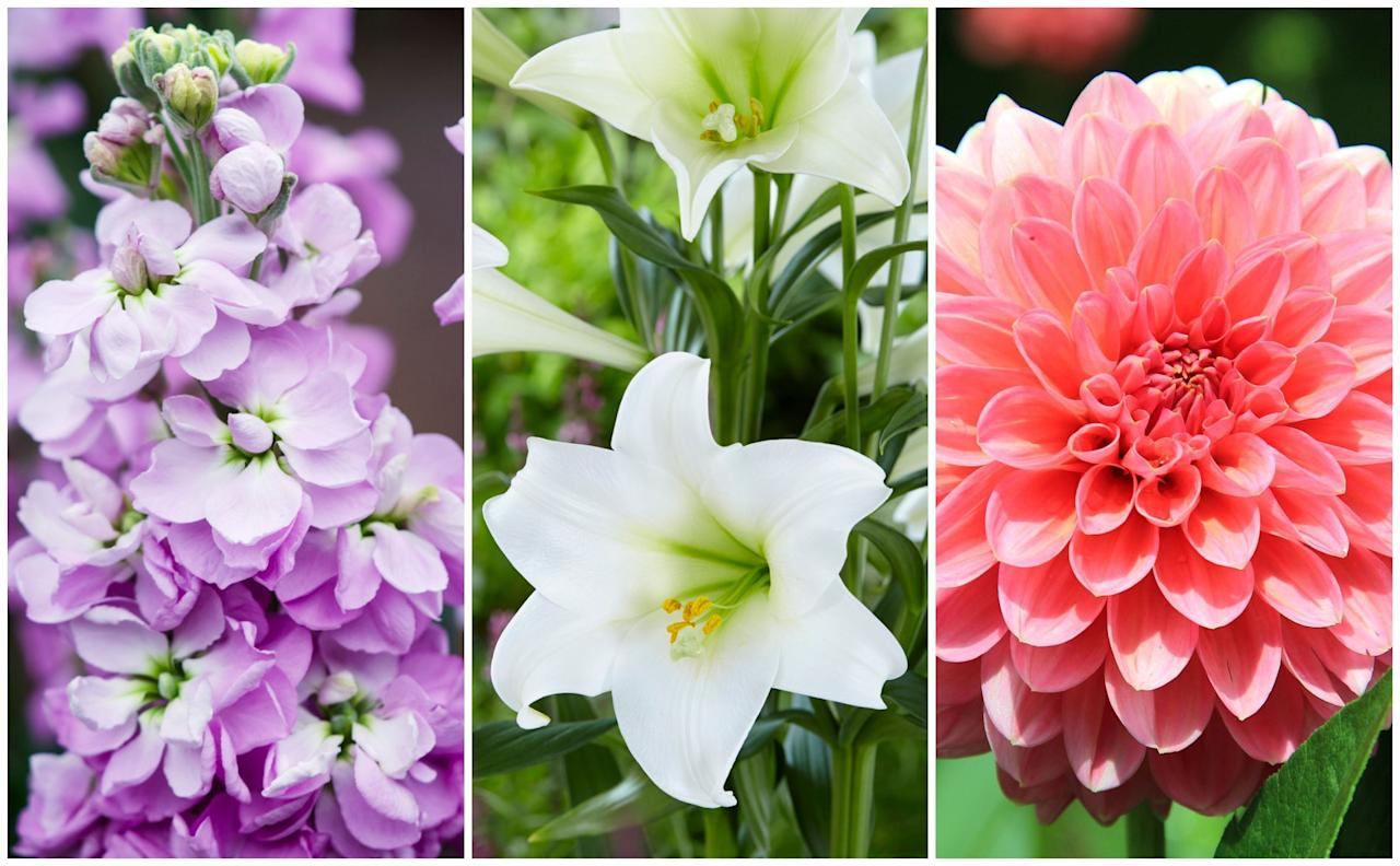 "<p><strong>Everything grown in Britain is seasonal, this means they are here when they naturally should be. This gives us <a href=""https://www.housebeautiful.com/uk/garden/plants/a27811768/friendship-flower-bouquet/"">flowers </a>that stay fresher, smell stronger and last longer – and ultimately, it uses significantly less carbon footprint than imported flowers. </strong></p><p>You can read more on the <a href=""https://www.housebeautiful.com/uk/garden/news/a2436/why-you-should-back-british-blooms/"" target=""_blank"">benefits of buying British-grown flowers here</a>, but in the meantime, bring some colourful blooms into your living space with this list of the best in-season flowers. <a href=""https://www.florismart.com/"" target=""_blank"">Florismart</a> florist expert, Katie-Jane Hermes, has shared the top 10 British blooms for July.</p>"