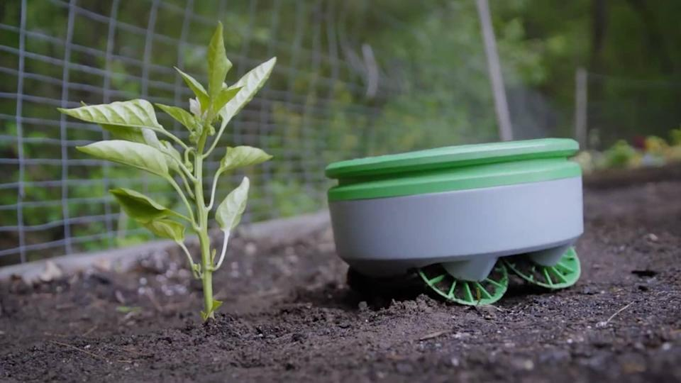 Forward-facing sensors embedded in the Tertill's round dinner-plate-sized body are always on the lookout for a weed.