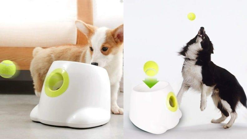 For the dog who loves to play fetch.