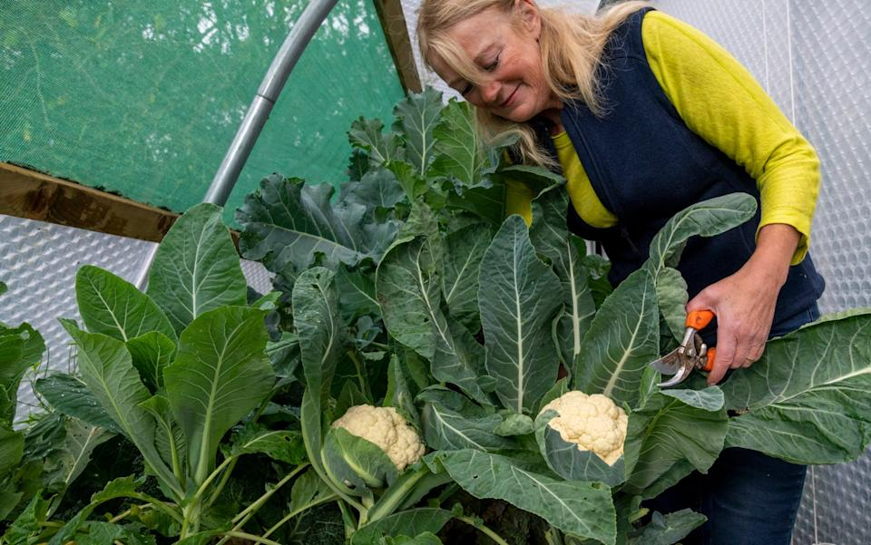 Double trouble: Bunny Guinness in the polytunnel - Andrew Crowley