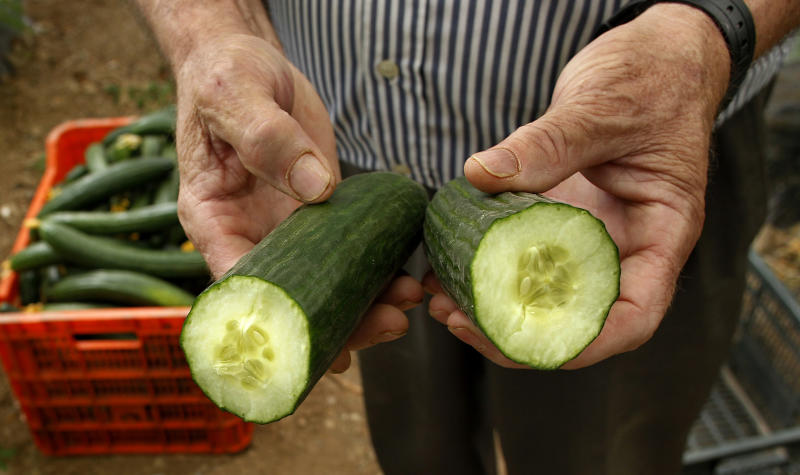 A farm worker shows a cucumber cut in half in a greenhouse in Algarrobo, near Malaga, southern Spain, on Tuesday, May 31, 2011. Angry Spanish farmers whose produce has been cited as a possible source of the deadly bacterial infection in Europe are watching in despair as machines grind their suddenly unwanted fruit and vegetables into compost and are particularly livid with Germany. Spanish agriculture associations accuse German officials of being trigger-happy in singling out two Spanish farm produce companies as sources of cucumbers tainted with E. coli before ascertaining if the vegetables were contaminated before leaving Spain or along the transport chain or while being handled in Germany itself.  (AP Photo/Sergio Torres)