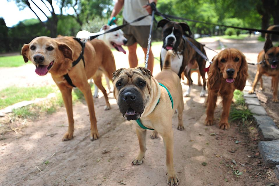 Some slammed the potential new law, while others laughed - saying they already walk their dog for more than an hour a day. Source: Getty Images